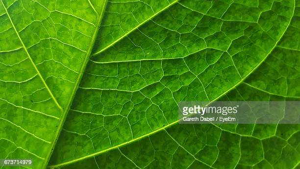 Full Frame Shot Of Leaf