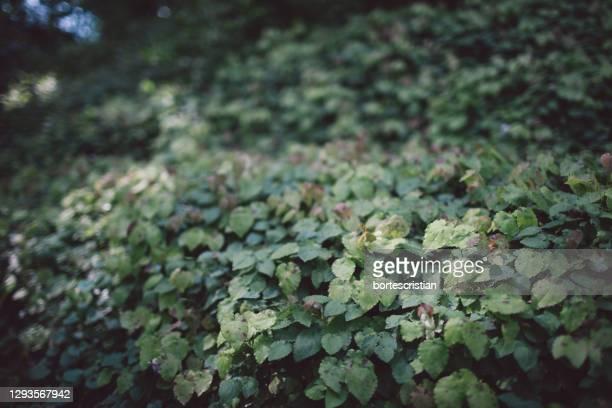 full frame shot of leaves on field - bortes imagens e fotografias de stock