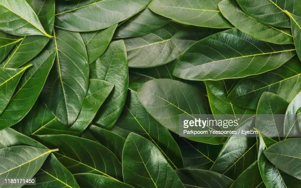 full frame shot of leaves - leaving stock pictures, royalty-free photos & images