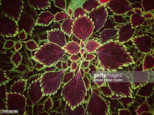 full frame shot of leaves - anatomy stock pictures, royalty-free photos & images