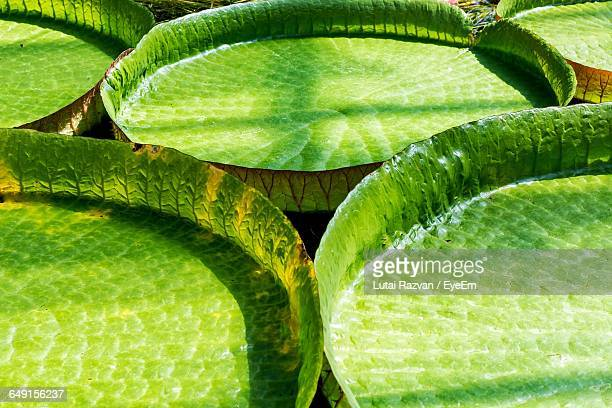 full frame shot of leaves - lutai razvan stock pictures, royalty-free photos & images