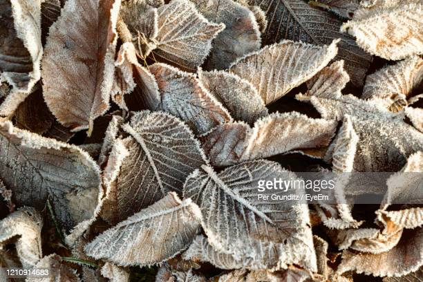 full frame shot of leaves with frost - per grunditz stock pictures, royalty-free photos & images