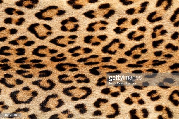 full frame shot of leopard print - animal pattern stock pictures, royalty-free photos & images