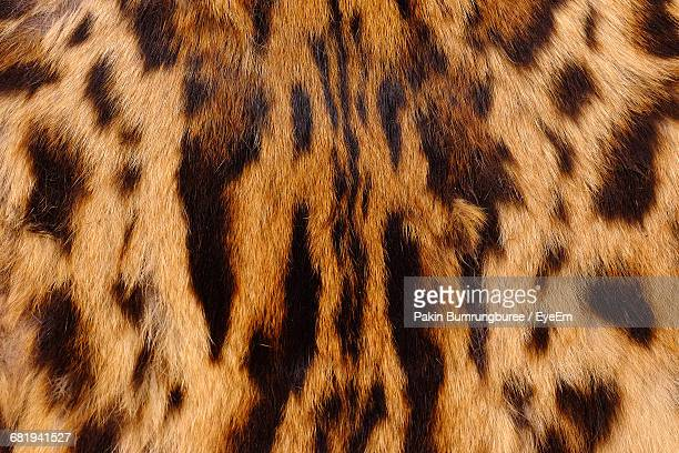 full frame shot of leopard skin - animal pattern stock pictures, royalty-free photos & images