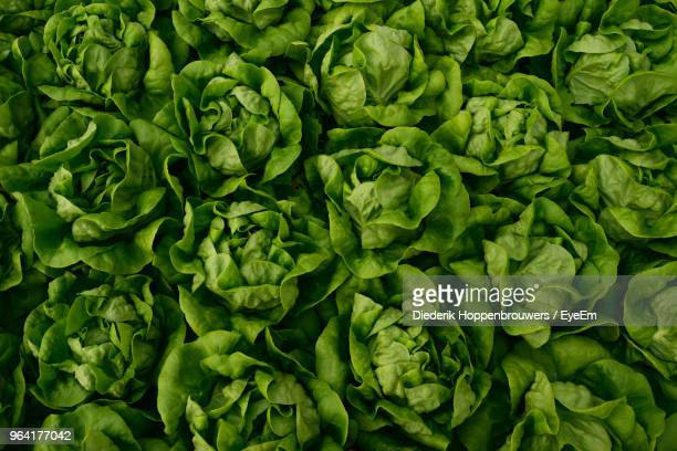 full frame shot of lettuce - lettuce stock pictures, royalty-free photos & images