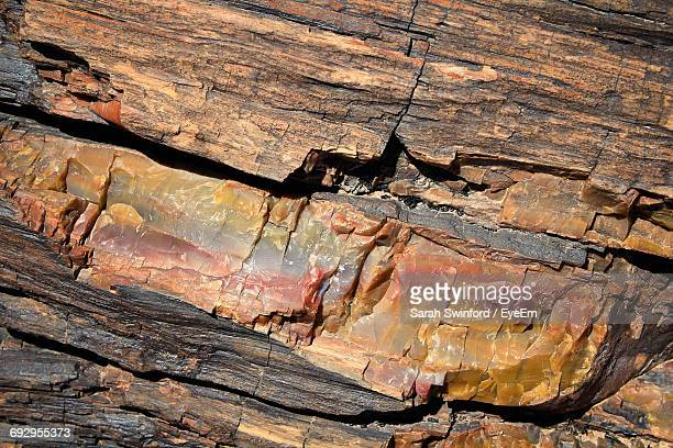 full frame shot of log at petrified forest national park - petrified wood stock pictures, royalty-free photos & images