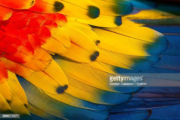 Full Frame Shot Of Macaw Feather
