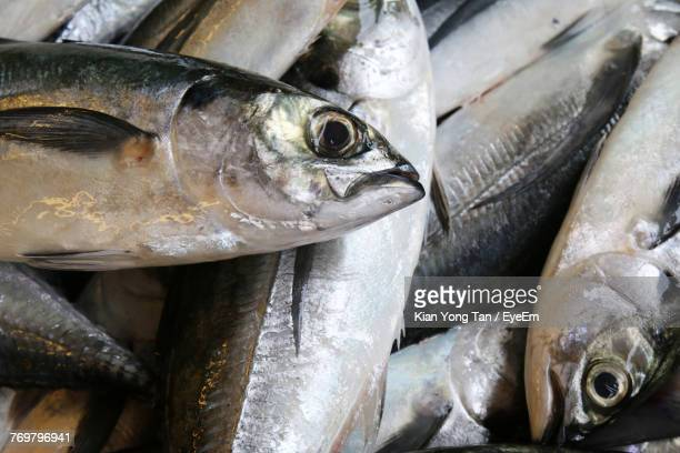 full frame shot of mackerel fish for sale in market - mackerel stock pictures, royalty-free photos & images