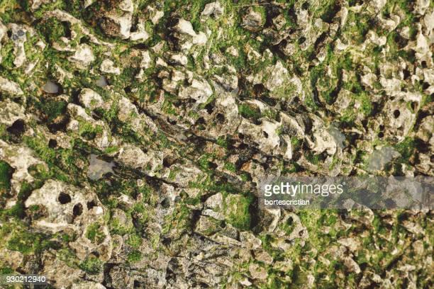 Full Frame Shot Of Moss Covered Rock