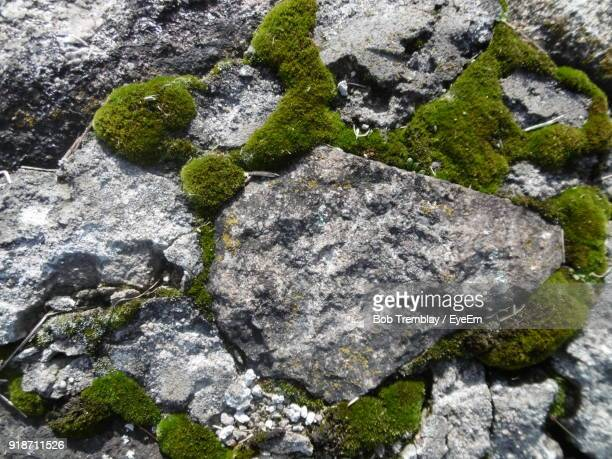 full frame shot of moss growing on rock - moss stock pictures, royalty-free photos & images