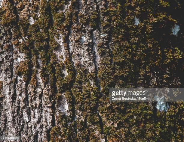 full frame shot of moss growing on tree - brezinska stock pictures, royalty-free photos & images