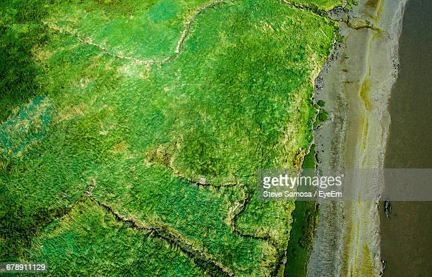 full frame shot of moss - widnes stock pictures, royalty-free photos & images