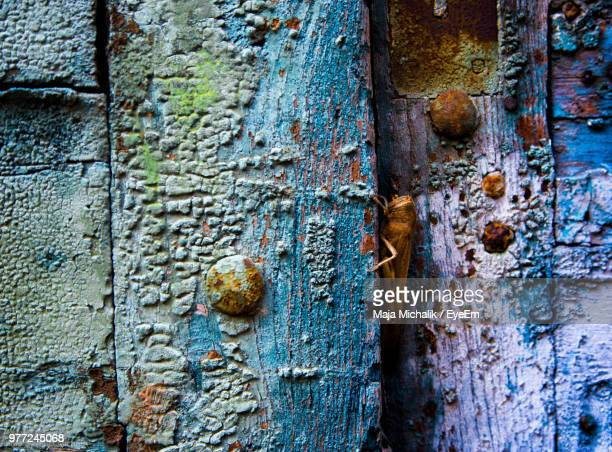 full frame shot of old weathered door - fauna selvatica foto e immagini stock