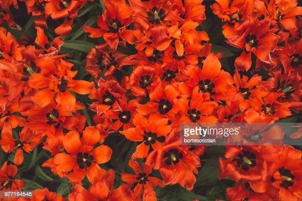 Full Frame Shot Of Orange Flowering Plants
