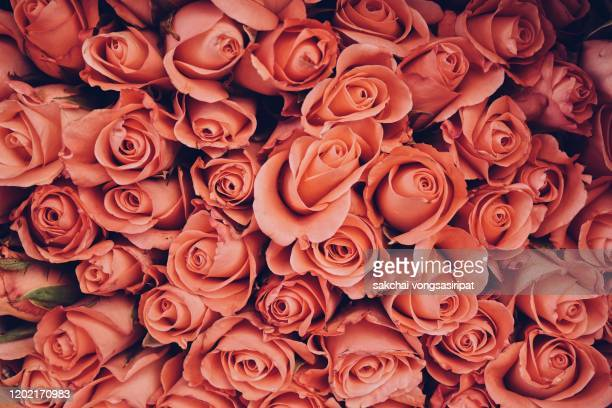 full frame shot of orange roses - anniversary stock pictures, royalty-free photos & images