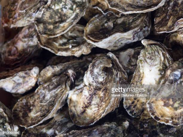 full frame shot of oysters - marek stefunko stock pictures, royalty-free photos & images