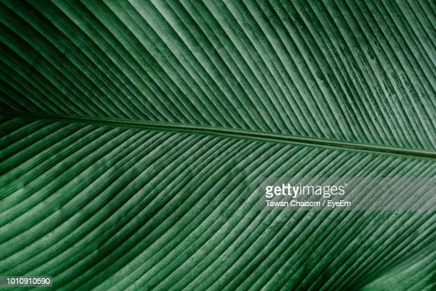 full frame shot of palm leaf - palm leaf stock pictures, royalty-free photos & images