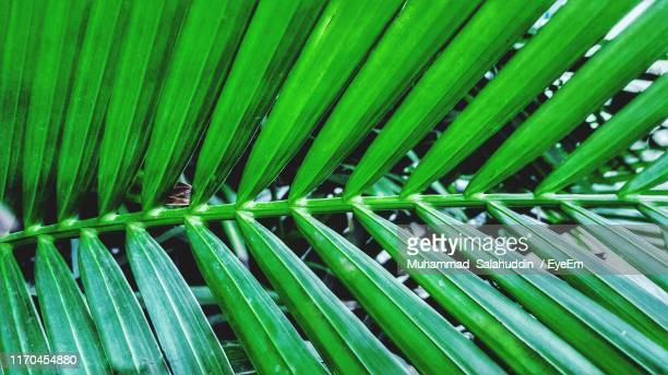 full frame shot of palm leaf - date palm tree stock pictures, royalty-free photos & images