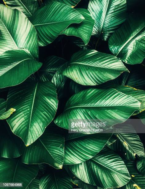 full frame shot of palm leaves - palm leaf stock pictures, royalty-free photos & images