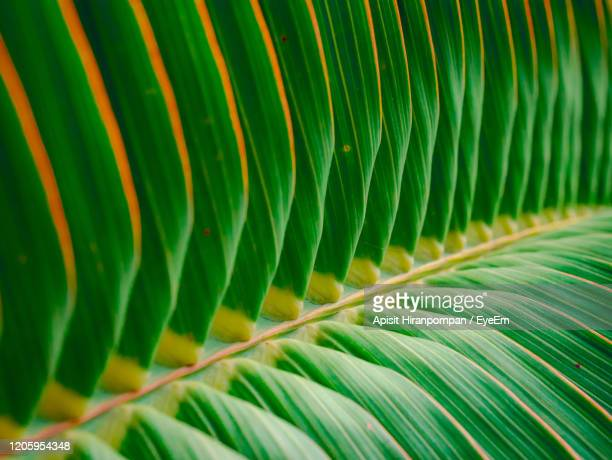 full frame shot of palm leaves - apisit hiranpornpan stock pictures, royalty-free photos & images