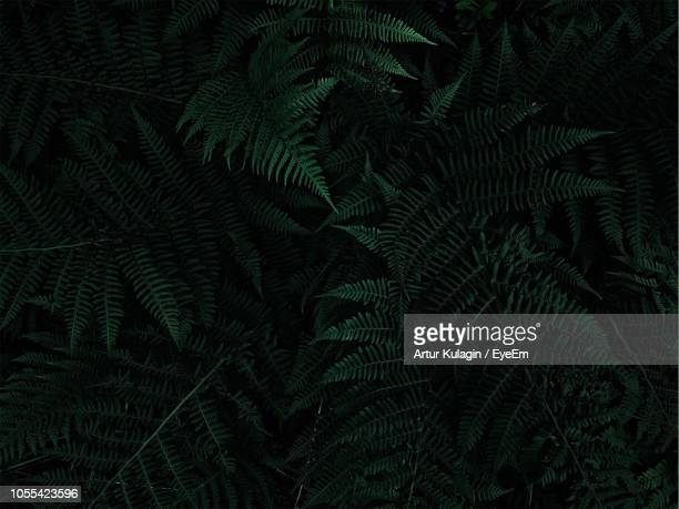 full frame shot of palm tree leaves - dark stock pictures, royalty-free photos & images