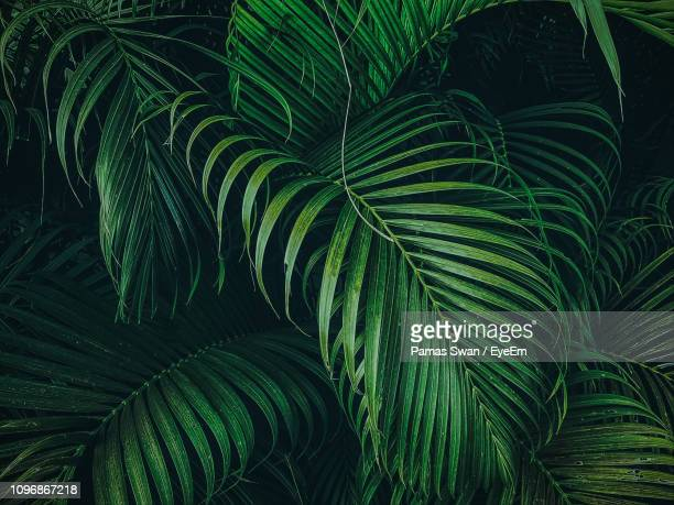 full frame shot of palm tree leaves - clima tropicale foto e immagini stock