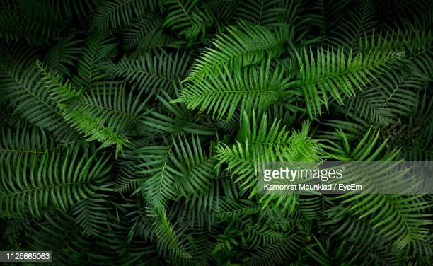 full frame shot of palm tree leaves - fern stock pictures, royalty-free photos & images