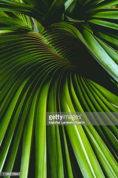 full frame shot of palm tree leaves - leaf stock pictures, royalty-free photos & images