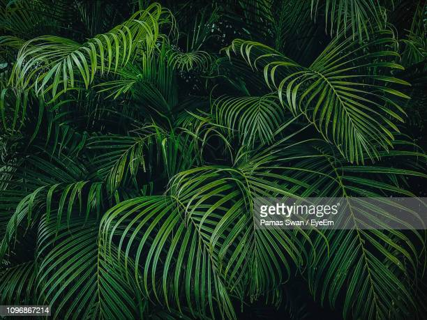 full frame shot of palm tree - palm leaf stock pictures, royalty-free photos & images