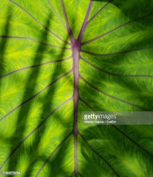 full frame shot of palm tree - tree trunk stock pictures, royalty-free photos & images