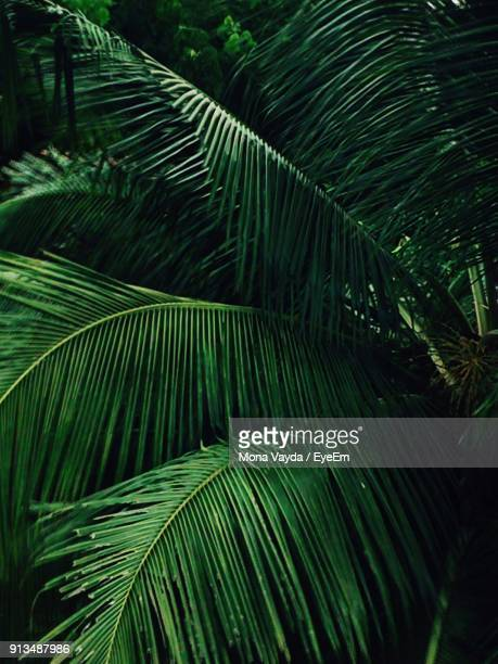 Full Frame Shot Of Palm Tree