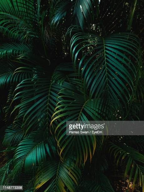 full frame shot of palm trees - tropical tree stock pictures, royalty-free photos & images