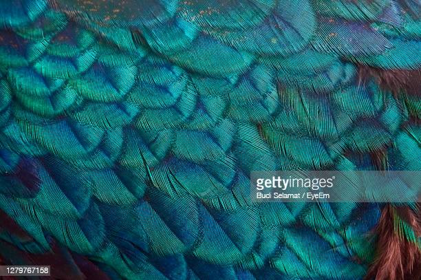 full frame shot of parrot - bandung stock pictures, royalty-free photos & images