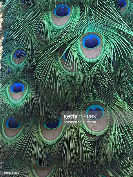 full frame shot of peacock feathers - paon photos et images de collection