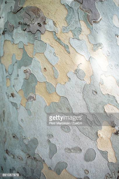 Full Frame Shot Of Peeling Tree Trunk