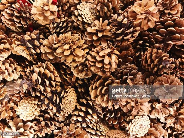 full frame shot of pine cones - pinecone stock pictures, royalty-free photos & images