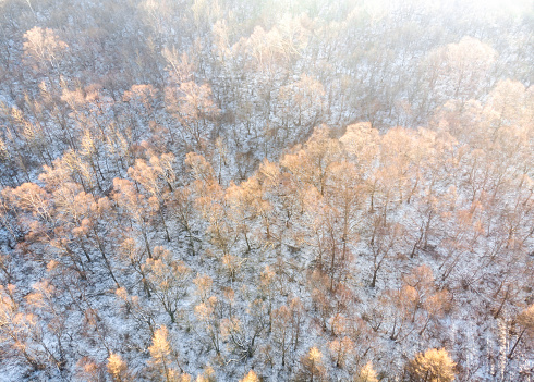 Full Frame Shot Of Pine Trees In Forest During Winter - gettyimageskorea