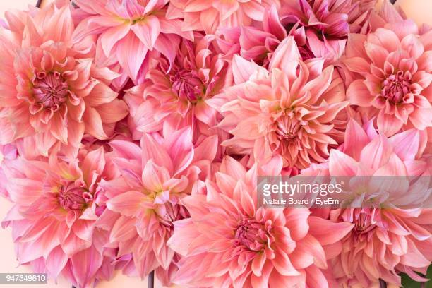 full frame shot of pink dahlia flowers - pink flowers stock pictures, royalty-free photos & images