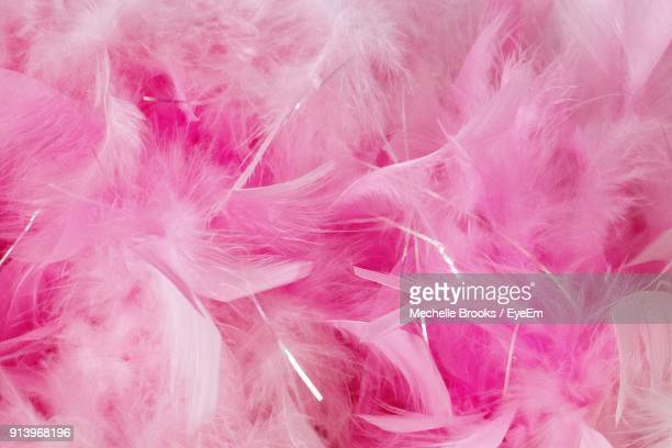 full frame shot of pink feather - plume photos et images de collection