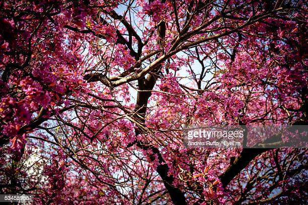 full frame shot of pink flower tree - andres ruffo stock pictures, royalty-free photos & images