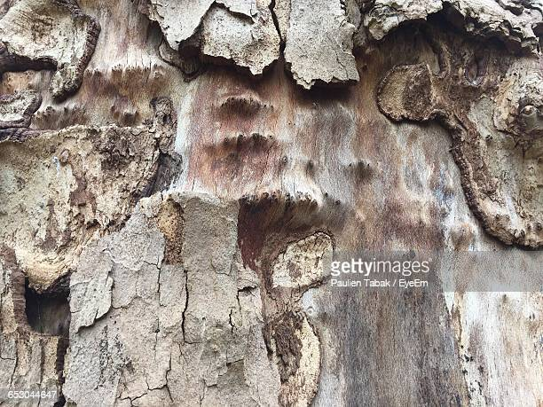 full frame shot of plant bark - paulien tabak 個照片及圖片檔