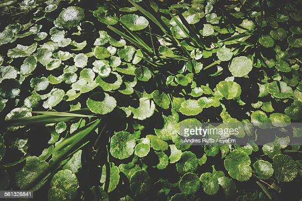 full frame shot of plant - andres ruffo stock pictures, royalty-free photos & images
