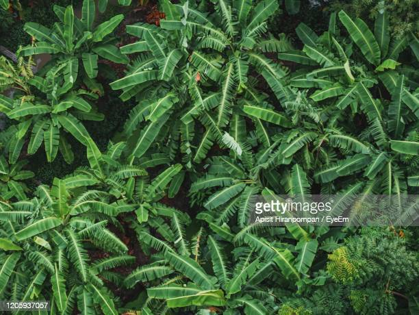 full frame shot of plants growing on field - apisit hiranpornpan stock pictures, royalty-free photos & images
