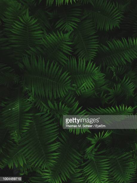 full frame shot of plants growing outdoors - fern stock pictures, royalty-free photos & images