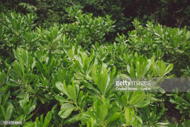 full frame shot of plants - bortes foto e immagini stock