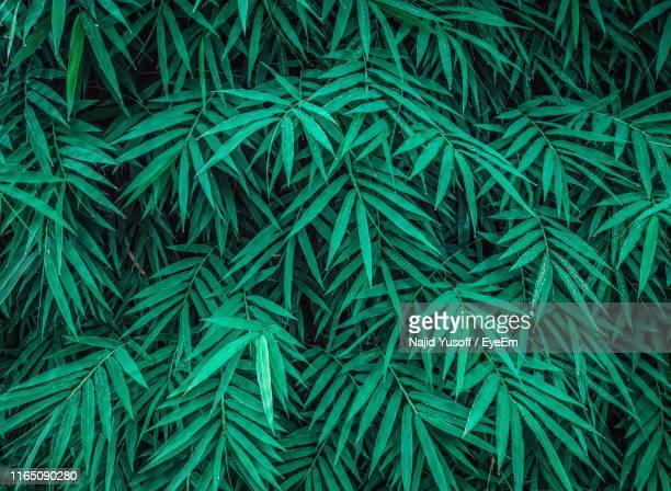 full frame shot of plants - najid yusoff stock pictures, royalty-free photos & images