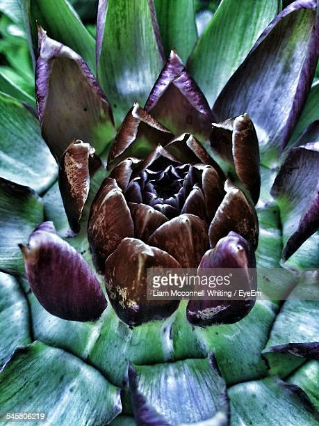 full frame shot of plants - mcconnell stock pictures, royalty-free photos & images