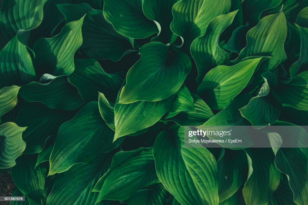 Full Frame Shot Of Plants : Stock Photo