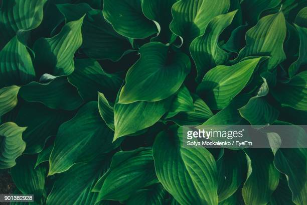 full frame shot of plants - green stock pictures, royalty-free photos & images