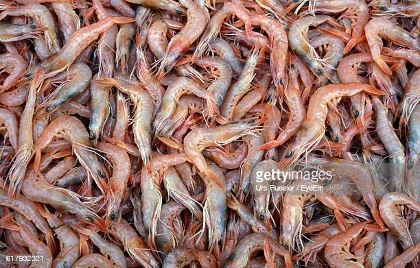 Full Frame Shot Of Prawns